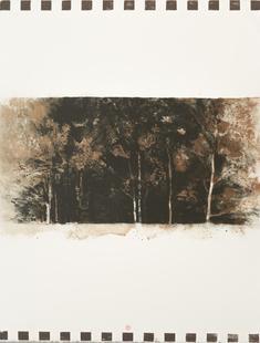 Brun skogskant  (1)