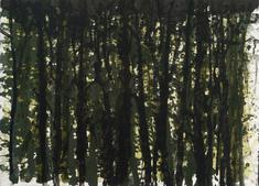 Lövskog  (12)