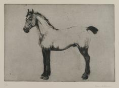 En häst från Normandie