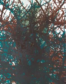 Äppelträd II  (8)