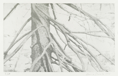 Gren           (träd i silver)