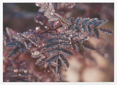 Lövdroppar (ur Från min skog)