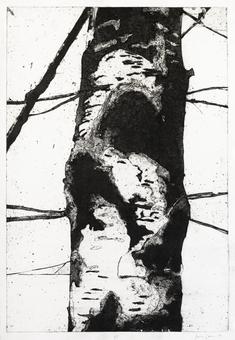 Skogens frestelse (E)