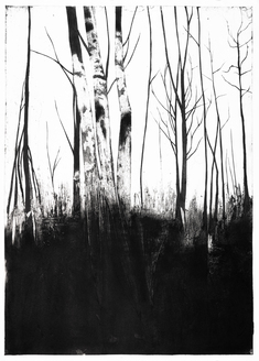 Skogens frestelse: II