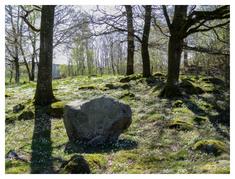 Sten (ur Annan skog) / Stenen