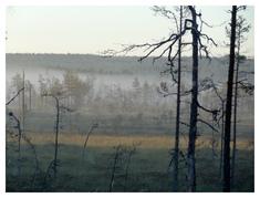 Älgamark (ur Från min skog)