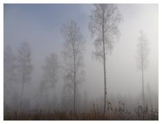 Morgondimma (ur Från min skog)
