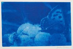 Fjäril   (blå)