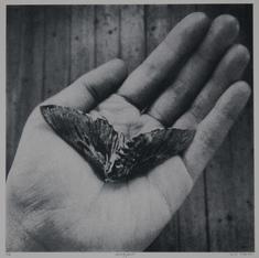 Nattfjäril