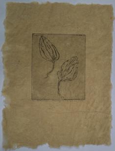 Gårdsgroblad