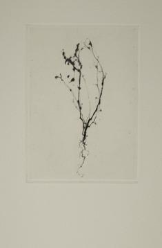 Porträtt av en obetydlig växt V
