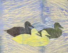 Andfåglar till havs