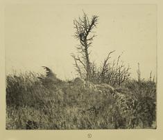 Skelett i landskap