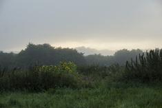 Regnmorgon ljusnar
