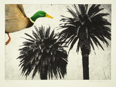 utan titel (gräsand över palmer)