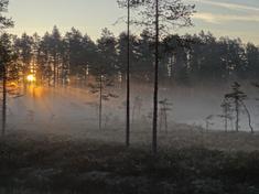 Morgonsol över älvdansen